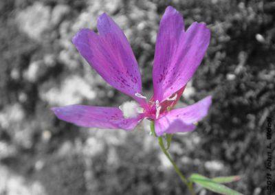 Squirrel Creek Flower