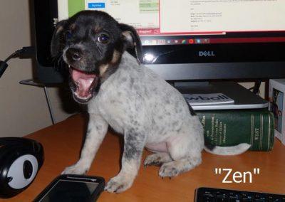 Zen The Puppy Dog